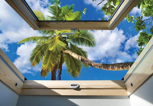 Obrazek Widok z okna na niebo i palmę