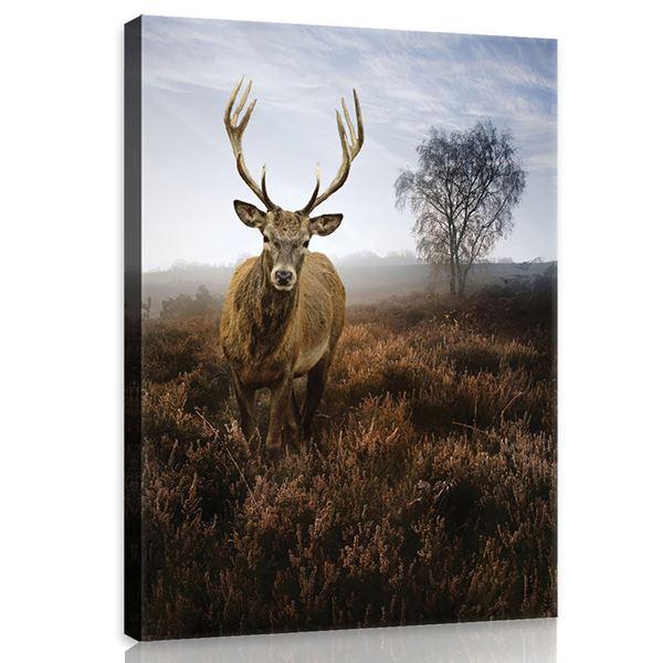 Obrazek Jeleń na polanie we mgle