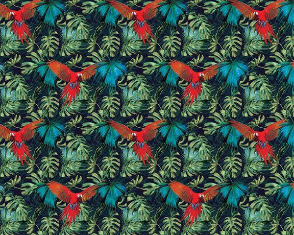Obrazek Papuga